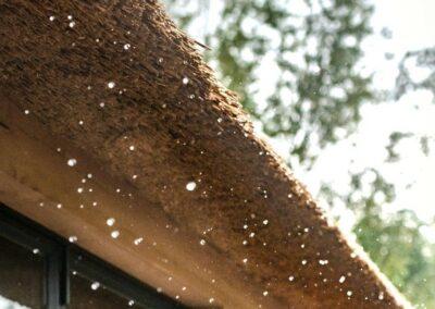 poolhouse met rieten dak zwart hout 15